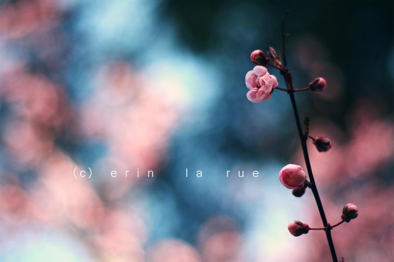 Spring by SoraBelle