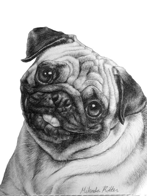 how to draw a pug face easy