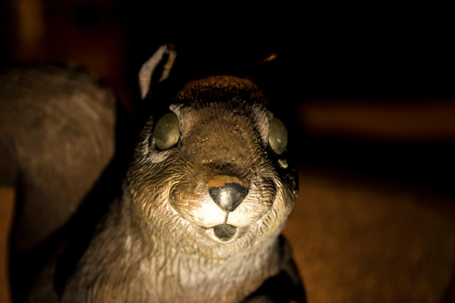 Insolite (et autres bizarreries sans importance) - Page 39 Creepy_squirrel_statue_by_nickw324_d5elf0u-fullview.jpg?token=eyJ0eXAiOiJKV1QiLCJhbGciOiJIUzI1NiJ9.eyJzdWIiOiJ1cm46YXBwOjdlMGQxODg5ODIyNjQzNzNhNWYwZDQxNWVhMGQyNmUwIiwiaXNzIjoidXJuOmFwcDo3ZTBkMTg4OTgyMjY0MzczYTVmMGQ0MTVlYTBkMjZlMCIsIm9iaiI6W1t7ImhlaWdodCI6Ijw9NjAwIiwicGF0aCI6IlwvZlwvZjJiOTFiMWItY2ZkNi00NDBkLTgzMGYtNjQ3ODlhMDViOGI3XC9kNWVsZjB1LWIxODU2Njk2LWE4ZWQtNGJhMS1hOTNkLTBiZmM1YjI5OGY1Ny5qcGciLCJ3aWR0aCI6Ijw9OTAwIn1dXSwiYXVkIjpbInVybjpzZXJ2aWNlOmltYWdlLm9wZXJhdGlvbnMiXX0