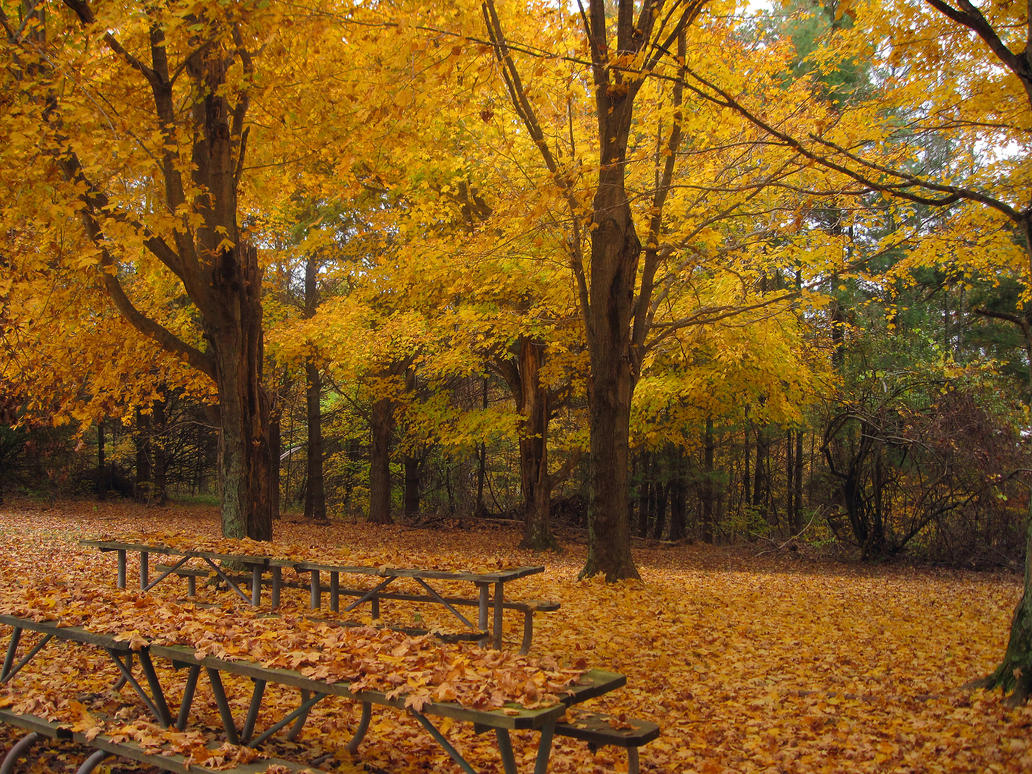 Forgotten Park by Mistshadow2k4