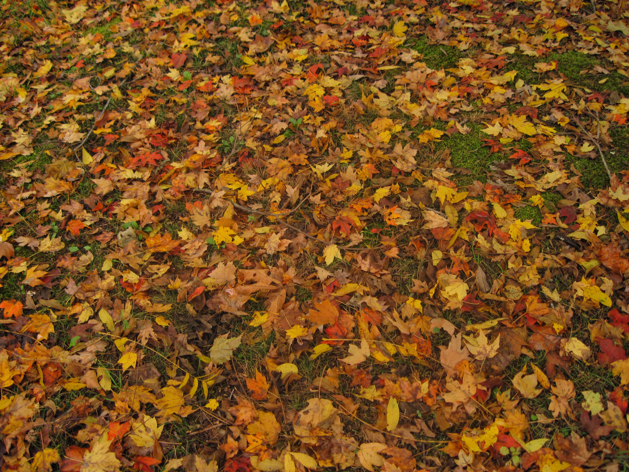 October Leaves by Mistshadow2k4