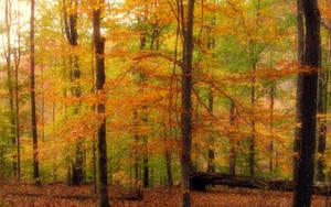 Anticipating Autumn by Mistshadow2k4