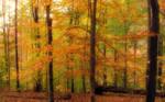 Anticipating Autumn