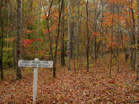 Lindsey Wilson Trail
