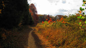 Woodsy Path
