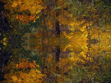 Fall Kaleidoscope II