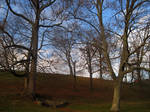 November Backdrop