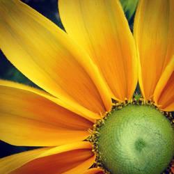 Like the Sun by Aenea-Jones