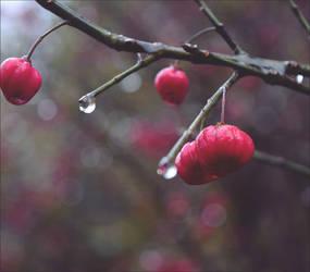 Autumn Pearls