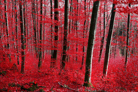 Bloodred Forest