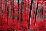 Bloodred Forest by Coccineus