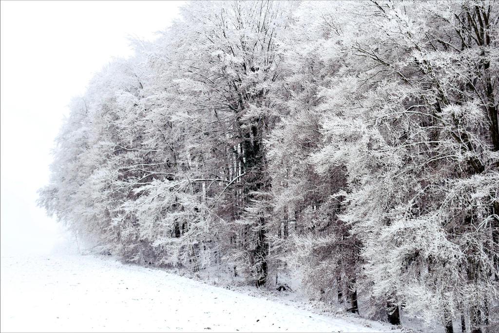 Wall of White by Aenea-Jones