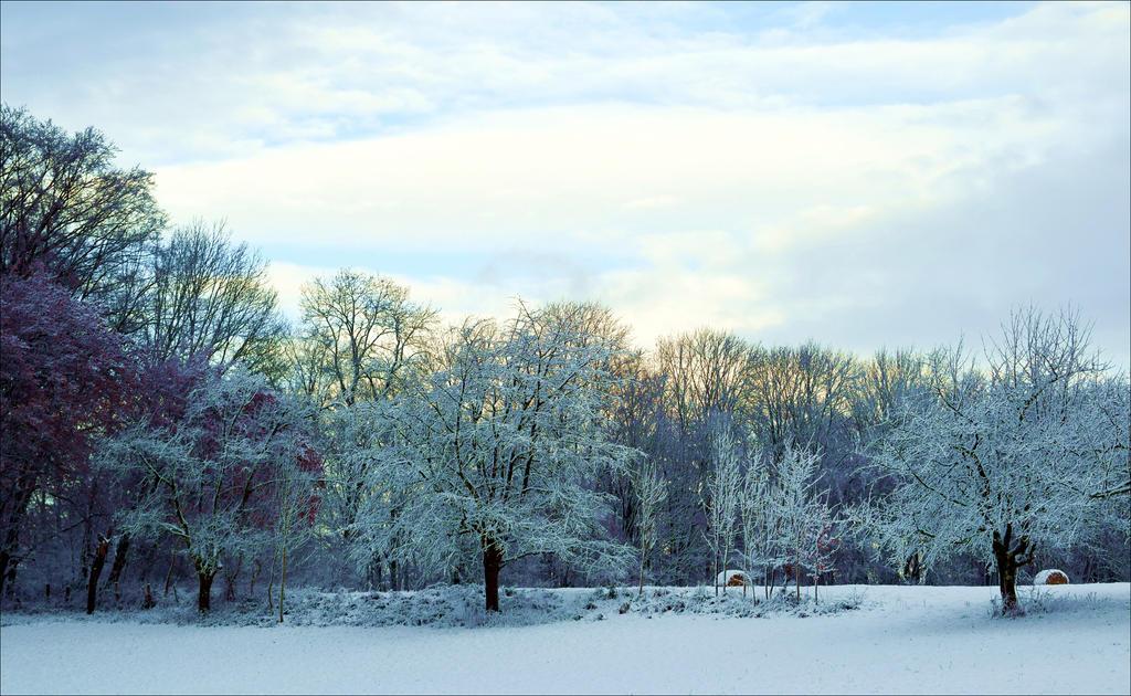 Winter Morning by Aenea-Jones