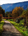 Autumnal Walk II