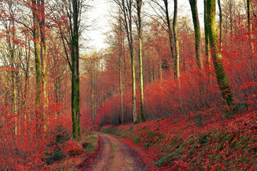 Red Pathway