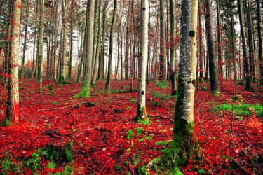 Deep Forest II by Aenea-Jones