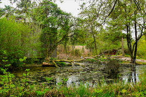 The Swamp by Aenea-Jones
