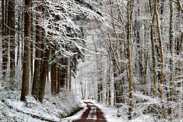 Snowland III by Coccineus