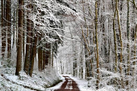 Snowland III