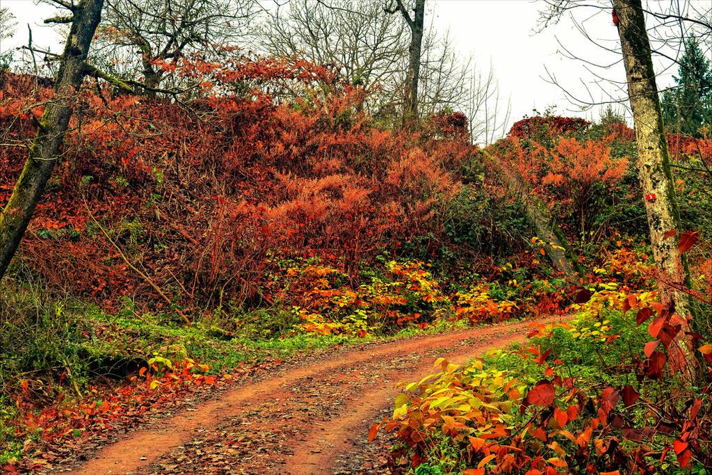 Autumnal Walk V by Aenea-Jones