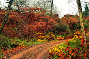 Autumnal Walk V by Aenea-Jones