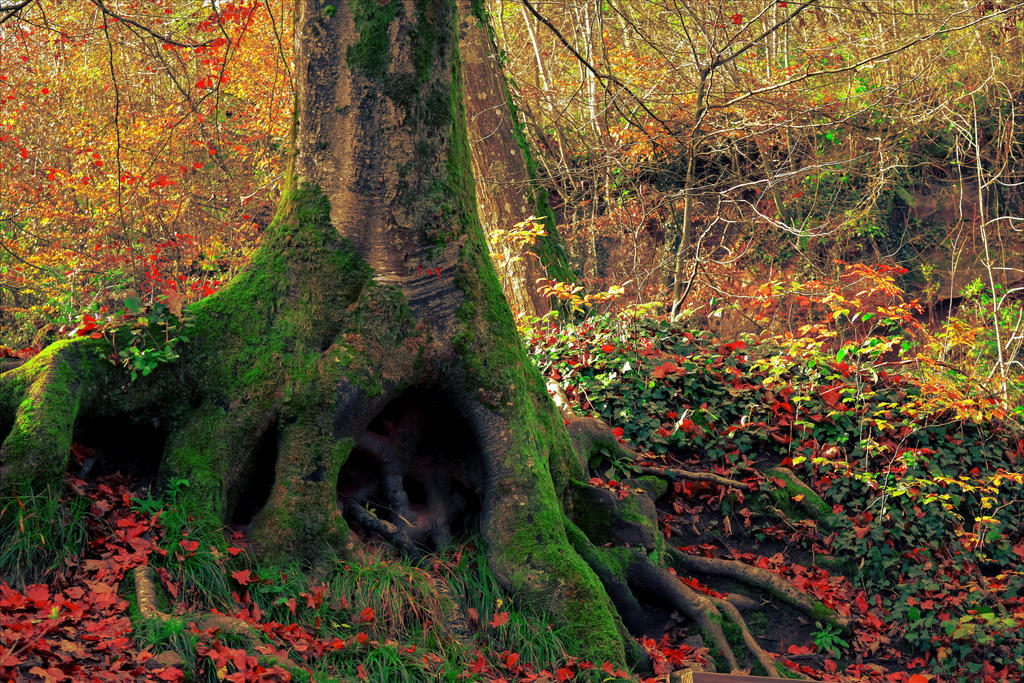 Come Alice, down the rabbit hole... by Aenea-Jones