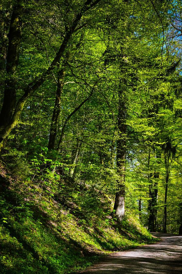 The World is Green II by Aenea-Jones