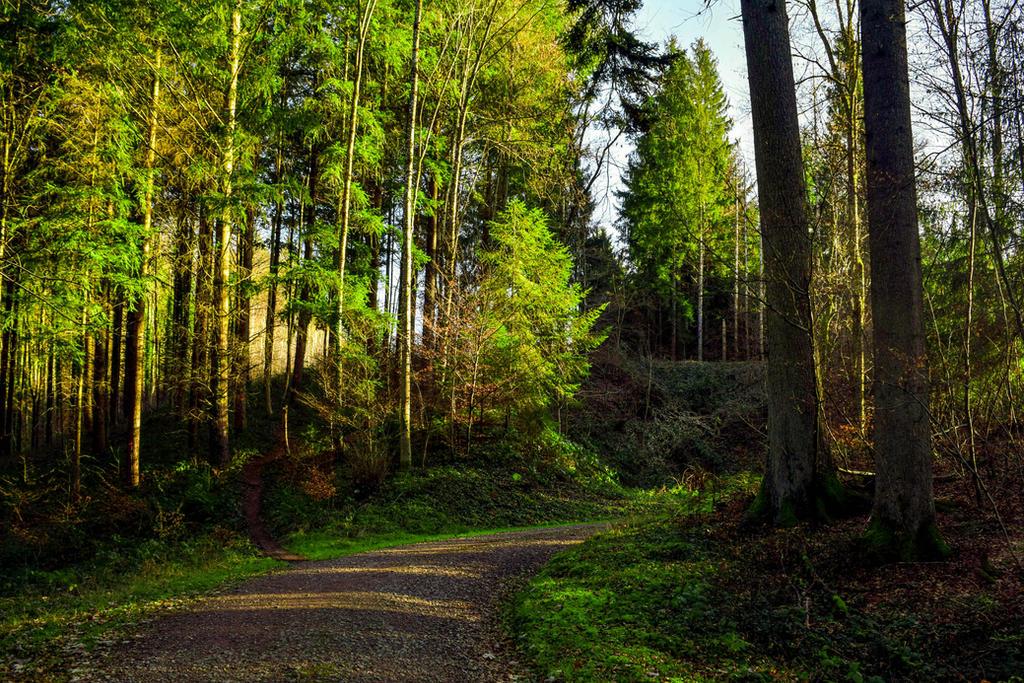 Forest Path by Aenea-Jones