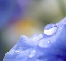 Drops by Aenea-Jones