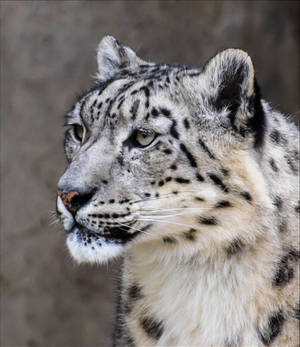 Beautiful Predator