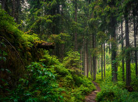 Forbidden Woods by Coccineus