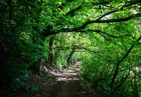 Overhanging Trees by Aenea-Jones