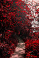 Into the Bloodred Forest by Coccineus