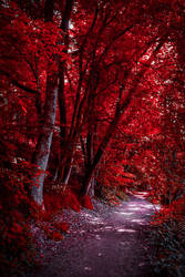 Through the Bloodred Forest