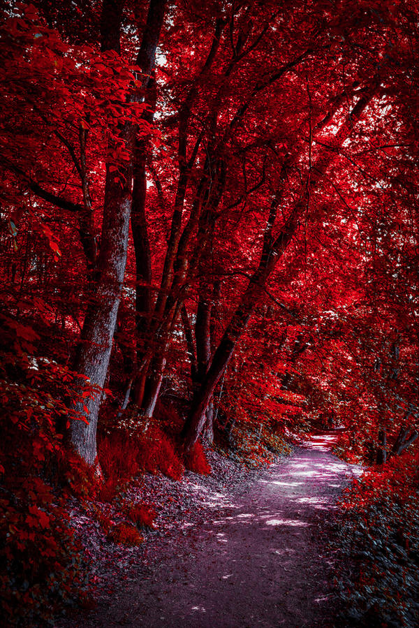 Through the Bloodred Forest by Aenea-Jones
