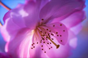Blossom by Aenea-Jones