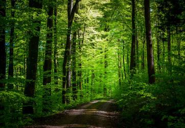 The World is Green VI by Aenea-Jones