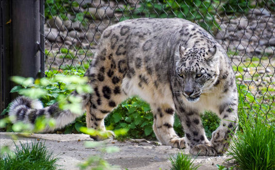 prowling around