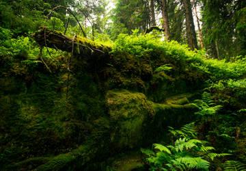A Place for Faeriefolk by Aenea-Jones