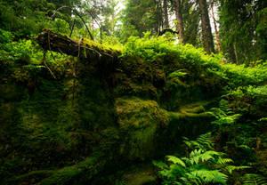 A Place for Faeriefolk