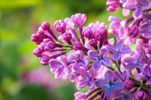 In Bloom by Aenea-Jones