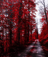 Bloodred Forest VI by Coccineus