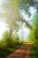 Foggy Morning II by Coccineus