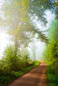 Foggy Morning II