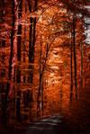 Autumn ablaze II