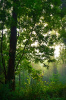Foggy Morning IV by Aenea-Jones