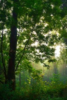 Foggy Morning IV