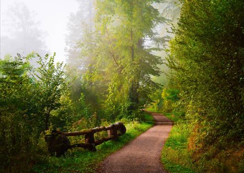 Foggy Morning V