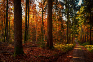 Let it Fall by Aenea-Jones