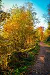 Autumn remembrance III